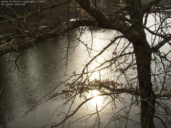 Sun on the Concord River through the bare branches of a sleeping tree.