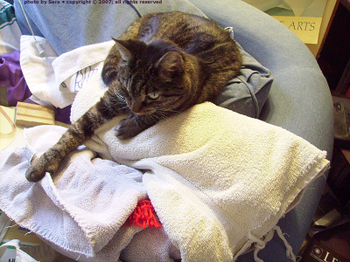 Sam on rolled up towels containing recent crocheting.
