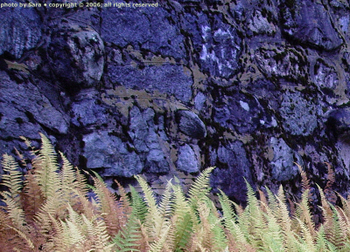 Ferns in front of a dark stone, not hubris but looking a lot like it, late on a rainy day.