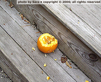 Mutilated pumpkin corpse, closer.