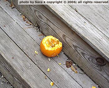 Mutilated pumpkin corpse, closer.