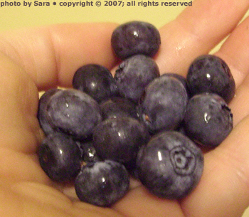A fistful of blueberries.