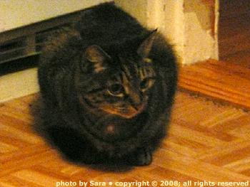 Sam as a Steinlen cat.