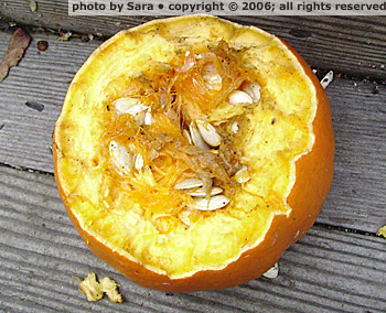 Mutilated pumpkin corpse, frame-fillingly close.