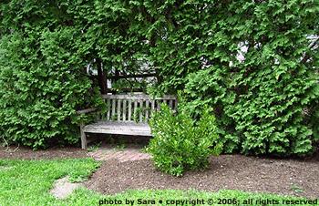 Shrub-shrouded bench in Chamberlin Park.