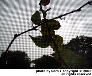 Vines on a café windowscreen.