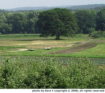 Hutchins Farm.