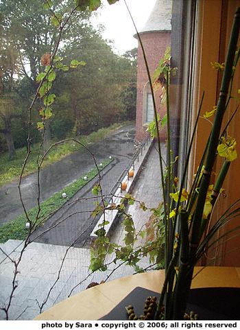 Café window ikebana.