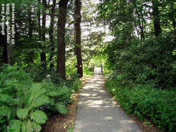 An inviting walk.