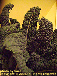 Dark, fresh lacinato kale leaves.
