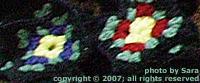 Primula squares.