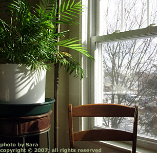 Palm plant gazing out the window at the stark winter landscape from which it is protected.