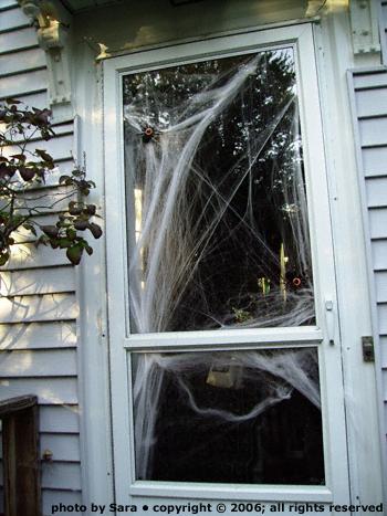 Spider have taken over our front door.