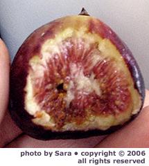Fresh Turkish brown fig, freshly bitten.